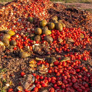 Food Manufacturers Solve Waste Problems With SAP Business One